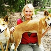 Alpine dingoes with keeper at Moonlit Sanctuary Wildlife Conservation Park