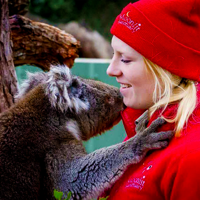 Koala cuddling keeper at Moonlit Sanctuary Wildlife Conservation Park