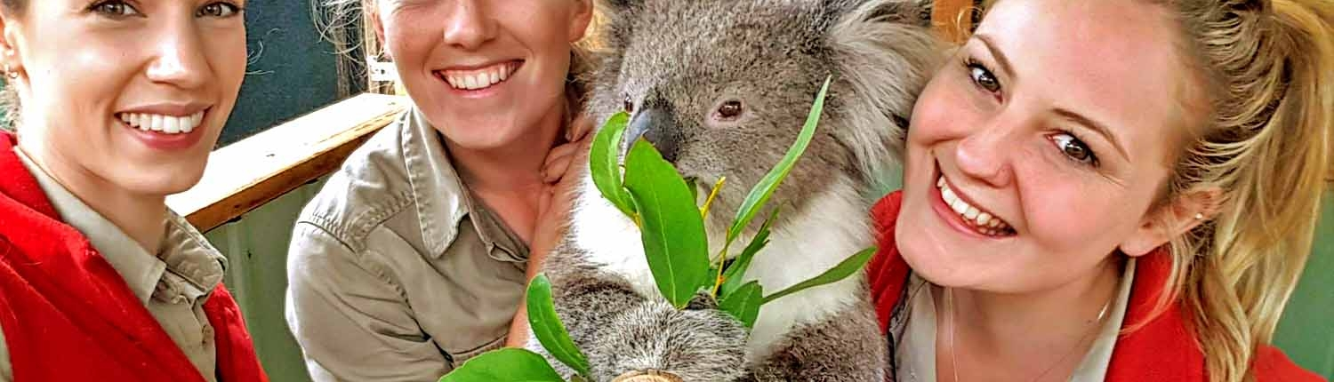 keepers and koala at Moonlit Sanctuary Wildlife Conservation Park