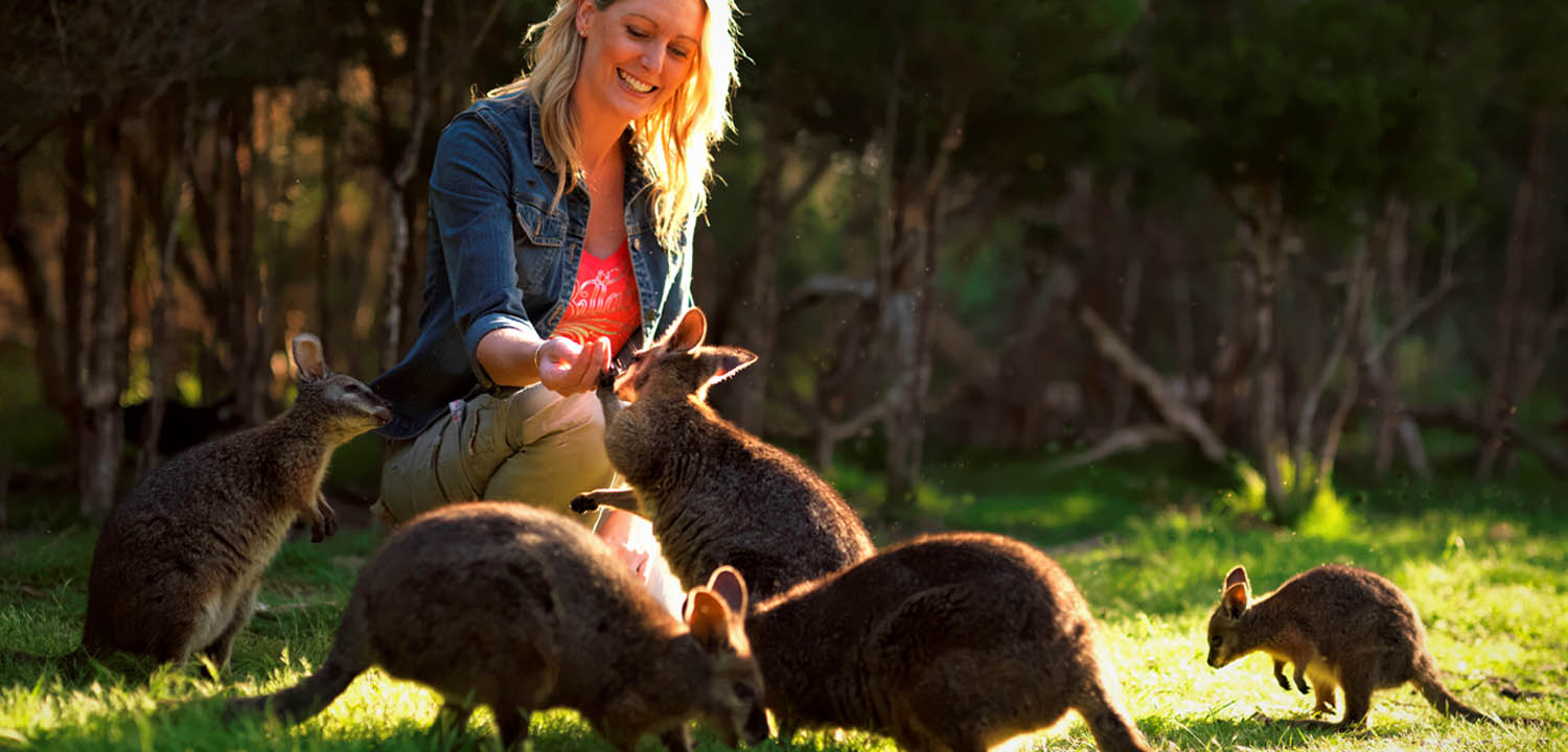 Female hand feeding wallabies at Moonlit Sanctuary Wildlife Conservation Park