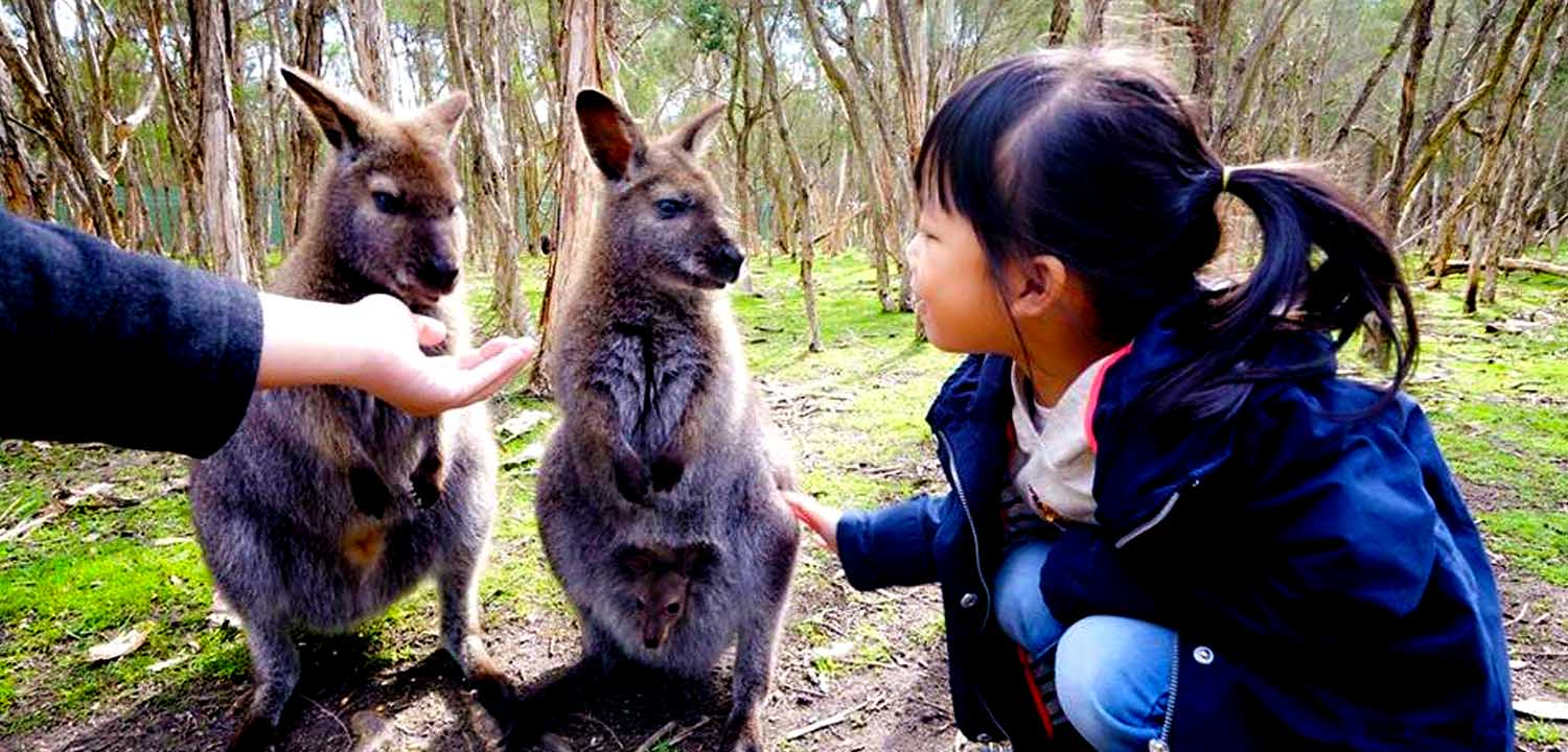 Young girl petting wallabies with joey in pouch at Moonlit Sanctuary Wildlife Conservation Park