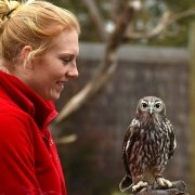 Barking owl with keeper at Moonlit Sanctuary Wildlife Conservation Park