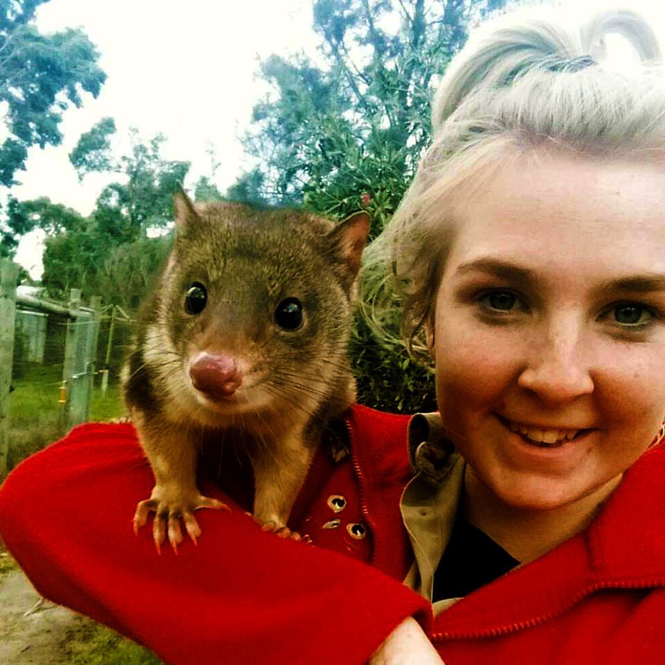Spot-tailed Quoll with keeper at Moonlit Sanctuary Wildlife Conservation Park