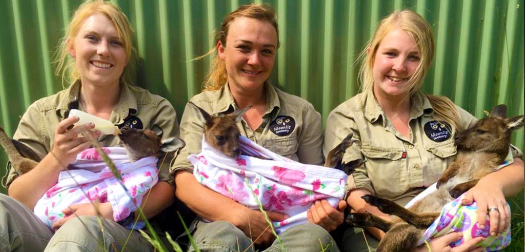 Kangaroo joeys with their keepers at Moonlit Sanctuary Wildlife Park
