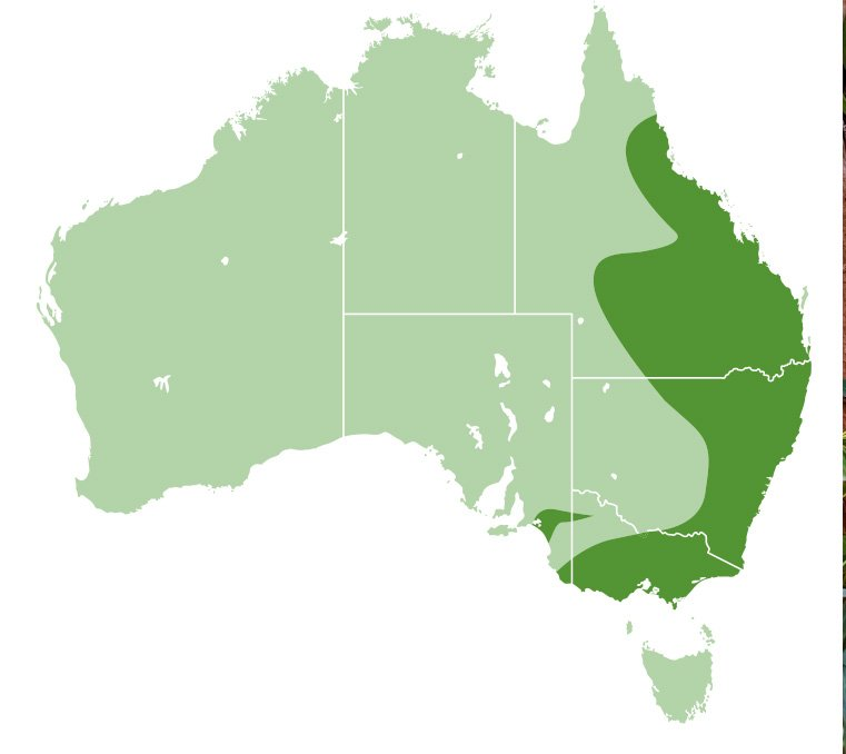 koala location map