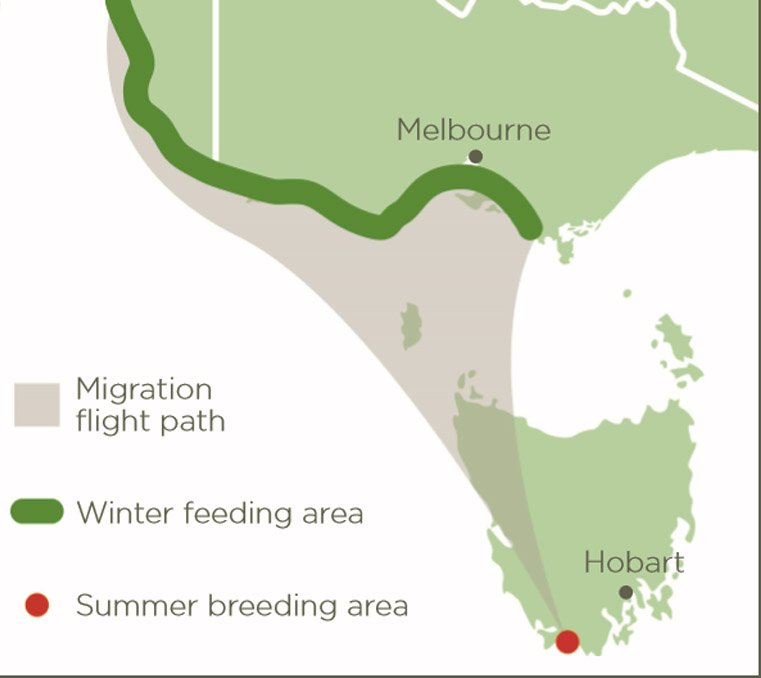 Map of orange-bellied parrot migration flight path