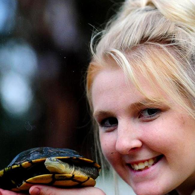 Eastern long-neck turtle at Moonlit Sanctuary Wildlife Conservation Park