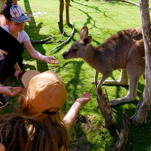 Keeper Club Holiday Program hand feeding kangaroos at Moonlit Sanctuary Wildlife Park
